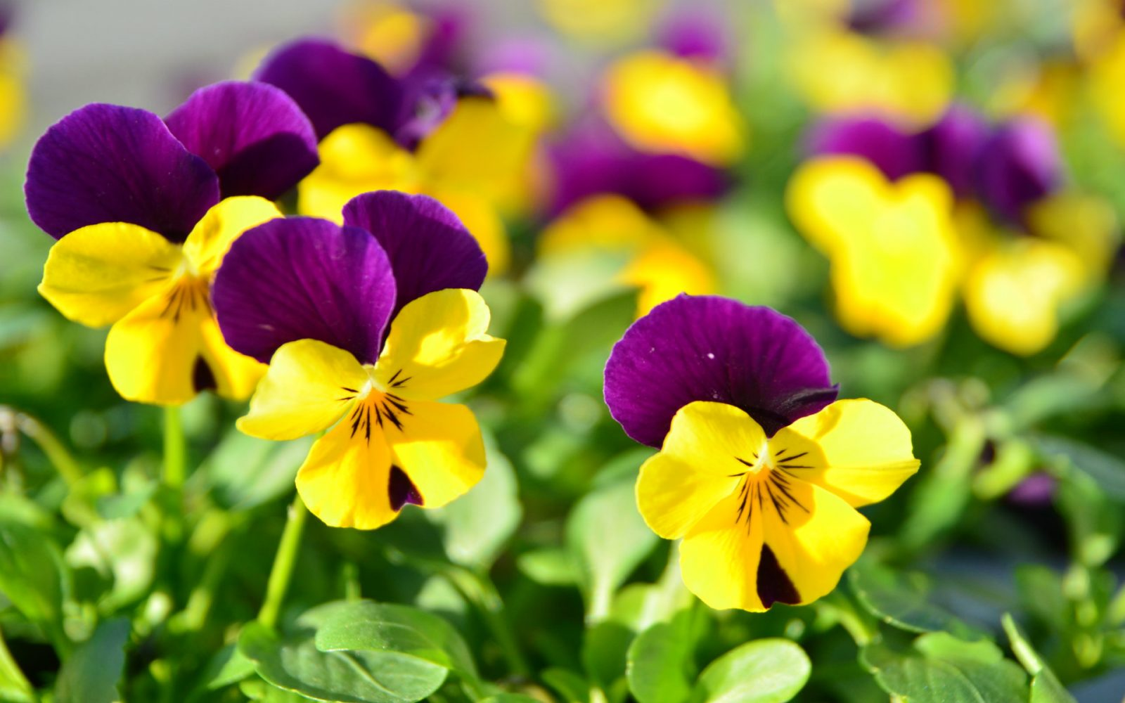 Consejos prácticos para el cuidado de las flores en CuidadoDeFlores.com