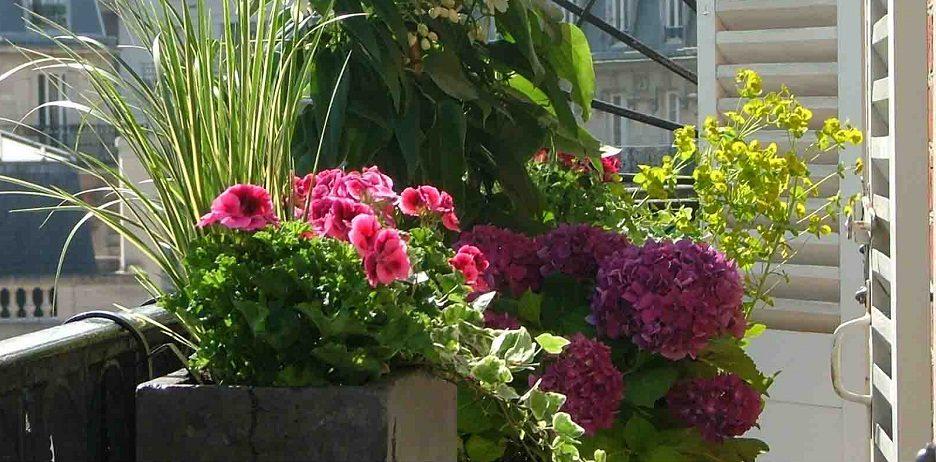Consejos para cultivar flores en terrazas - Decoracion de balcones con plantas ...