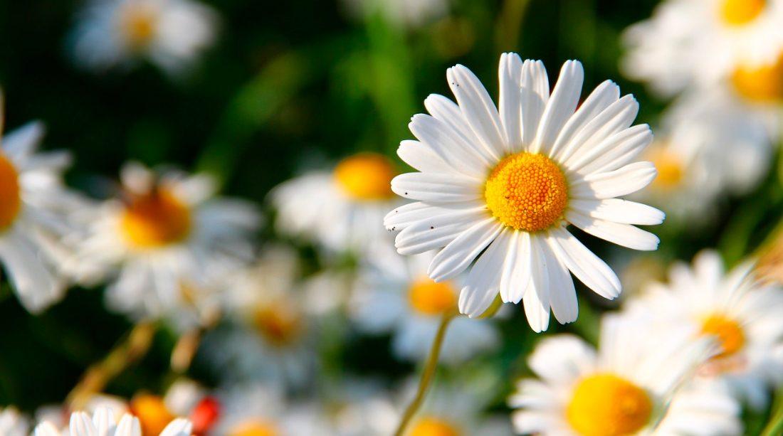 Las 10 Mejores Flores Medicinales