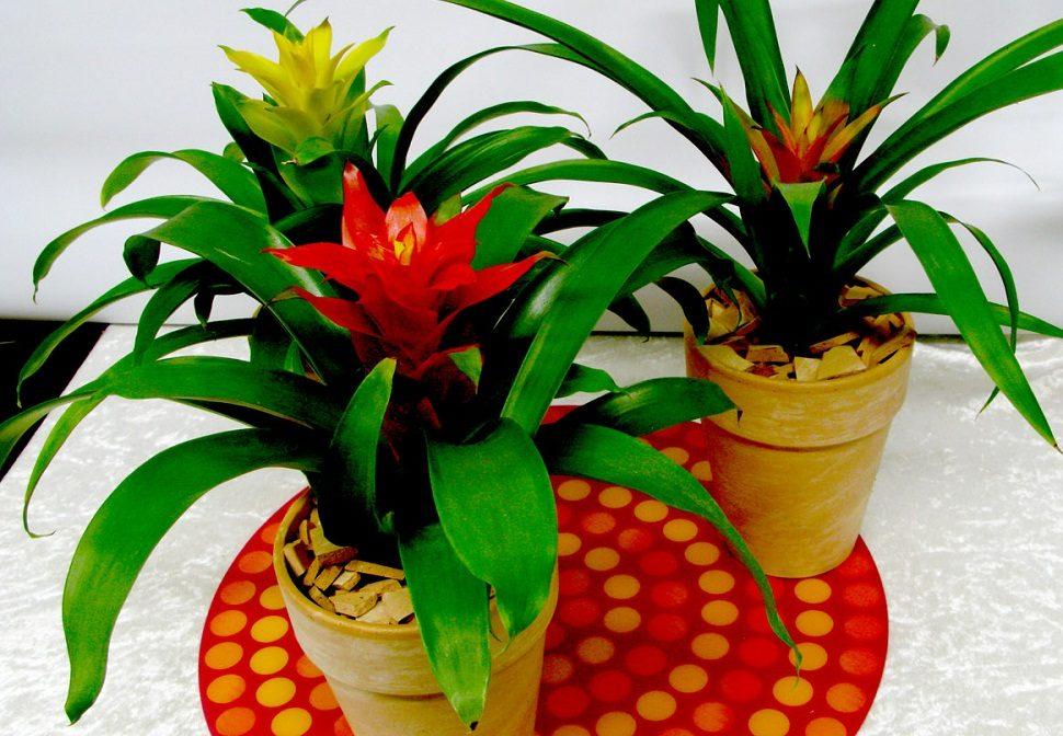 Galer a de im genes plantas de interior grandes - Plantas de interior fotos ...