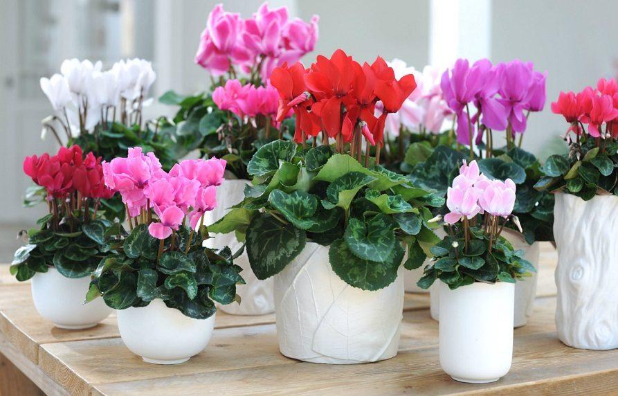 Plantas de interior para principiantes for Abono para plantas de interior